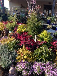 locally-grown perennials, shrubs, trees, and evergreens
