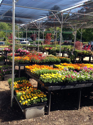 colorful annual flowers and plants
