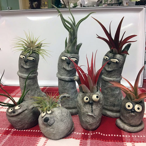 cute air plant holders with funny faces