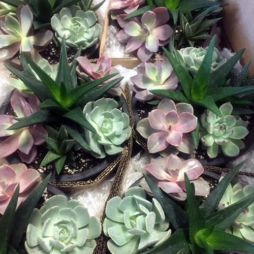 succulent plant collection