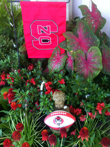 NCSU flag and plant display