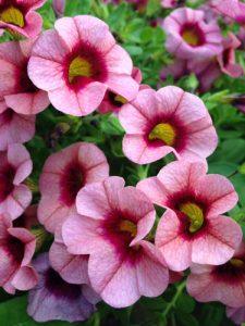 spring-flowers-pinkcloseup-lg