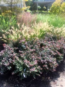 Fall ornamental grasses and colorful shrubs