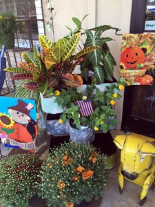 Fall flags, plants, mums