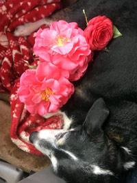 feb17-bayleaf-blossoms