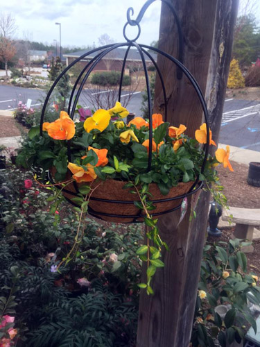 hanging basket pansies iron