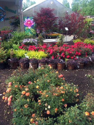 perennials shrubs garden flag