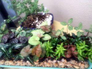 terrarium plants house plants fairy garden