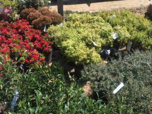 spring landscape shrubs