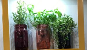 hydroponic herb gardening