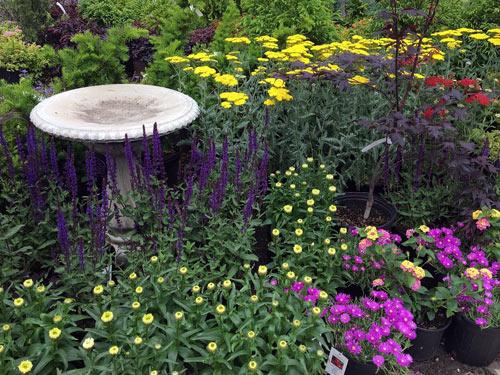 bird bath and perennial flowers