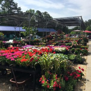 annuals to add color to your garden