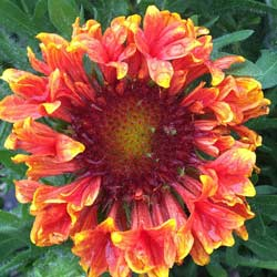 colorful orange flower blossom