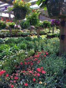 perennials and hanging baskets