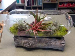 terrarium with air plants