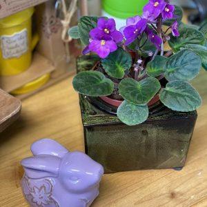 pretty violets in a pot with a purple ceramic bunny statue