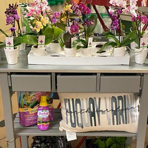 orchids and orchid fertilizer
